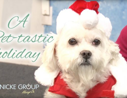 Our Pet-tastic Holiday Video